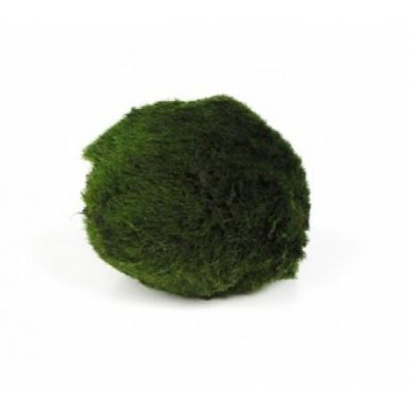 CLADOPHORA XL - la boule