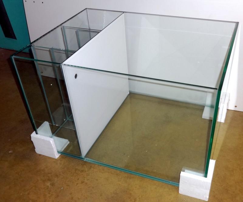 aquarium garra rufa 1