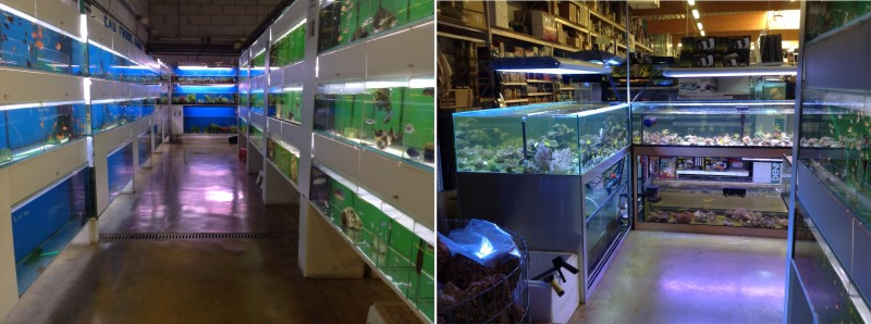 vente aquarium